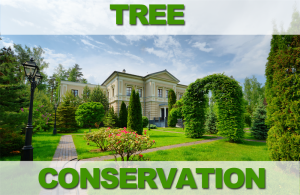 TREE-CONSERVATION-300x195
