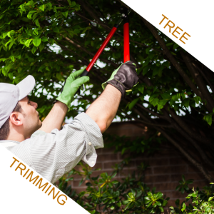 tree trimming pruning